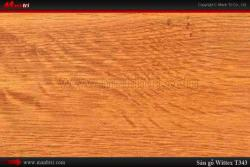 Sàn gỗ Wittex T343