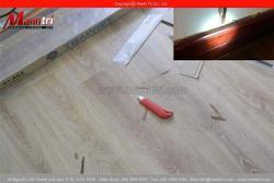 Sàn gỗ công nghiệp bị mối